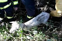 Kvůli záchraně zvířat běžné vyjíždějí také hasiči.
