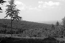 Pohled na les mezi Konůvkami a Kepkovem.