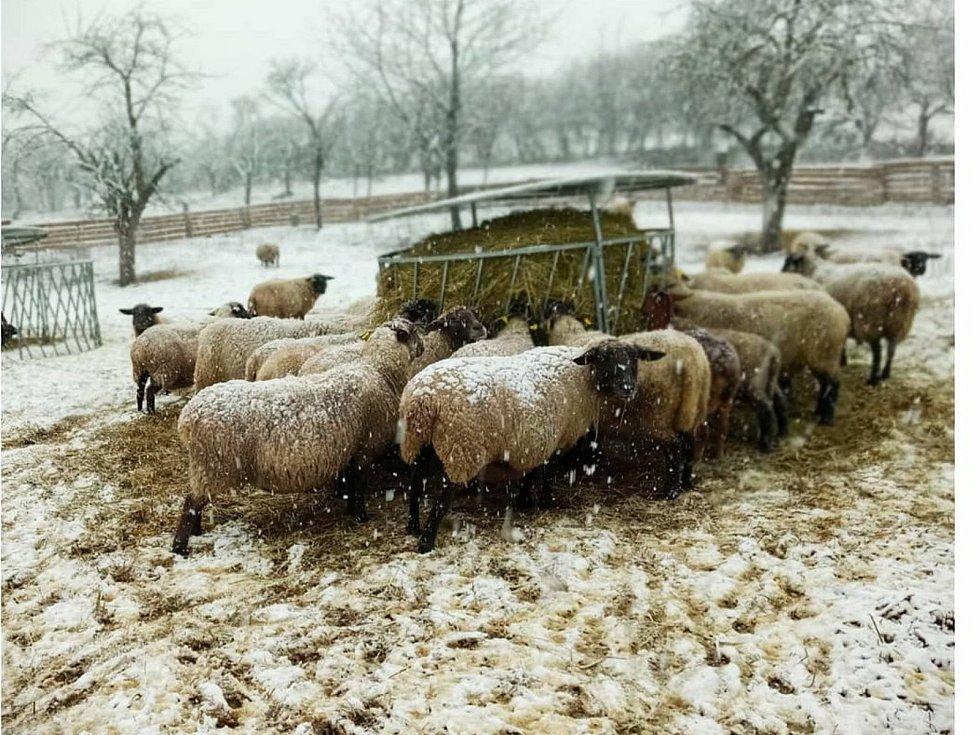 Kvůli covidovým omezením hledají farmy jiné cesty odbytu.