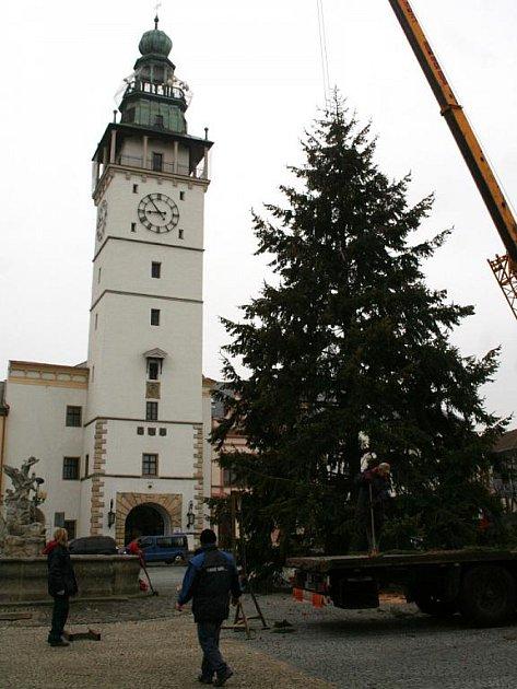 Vánočním stromem na vyškovském Masarykově náměstí bude letos douglaska tisolistá.