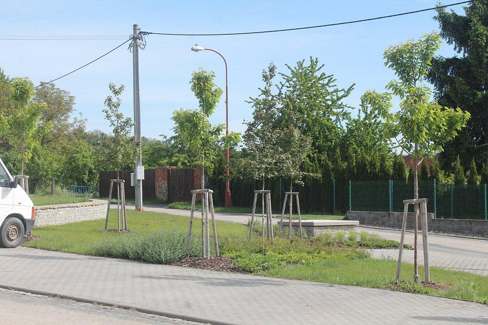 Výsadba zeleně v obci.