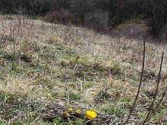 Ukrajinští dělníci kosili ohrožené druhy a používali chemikálie v národní přírodní rezervaci Větrníky u Letonic. Situaci prošetřuje inspekce.