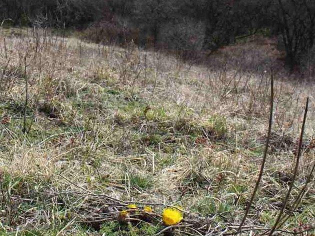 Ukrajinští dělníci kosili ohrožené druhy a používali chemikálie vnárodní přírodní rezervaci Větrníky uLetonic. Situaci prošetřuje inspekce.