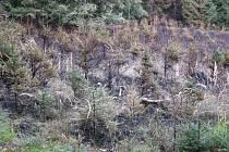 Při požáru u Vítovic lehlo popelem půl hektaru lesního porostu.