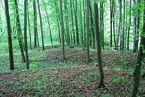 Lesníci i ekologická organizace letos a v příštích letech vysadí na Vyškovsku spoustu nových stromů.