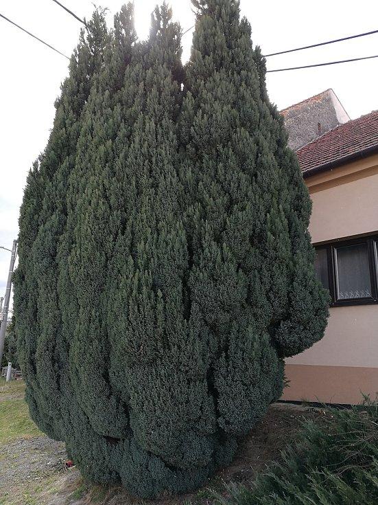 Na návštěvě v Lulči.