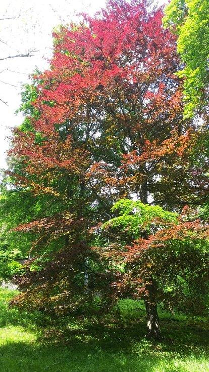 Příroda nabízí vděčné objekty k focení. Na snímku stromy v parku v Račicích.