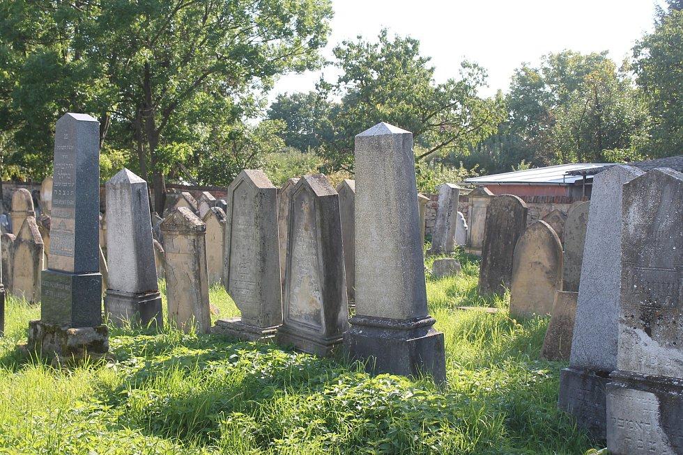 Na Borise Trávníčka před šesti lety spadl při exkurzi náhrobní kámen na židovském hřbitově v Rousínově. Základní škola Rousínov musí poškozenému zaplatit necelých devět milionů korun. Rozsudek není pravomocný.