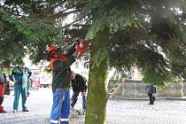 Vztyčování vánoční jedle na vyškovském náměstí.