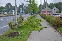 Lidem, kteří mají rádi přírodu, muselo být při pohledu na polámané stromky v Třinci hodně smutno.