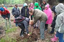 Děti v lese pomáhají.