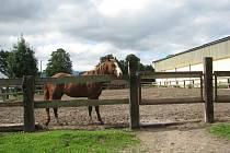 Kozlovice lákají turisty na ranč Paint Horse, Obecnou školu nebo pivovar s restaurací.