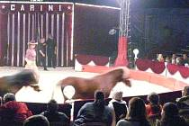 Snímek z manéže cirkusu Carini.