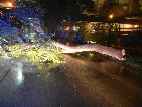 Hasiči uželezáren likvidovali za tmy nebezpečný strom