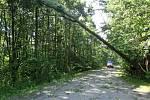 Ve Vojkovicích museli hasiči před poražením stromu odstřihnout elektrické dráty, při odstraňování stromu pomohl starostou zajištěný traktor.