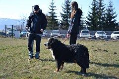Prostorný areál pro výcvik psů mají nově k dispozici členové Základní kynologické organizace v Třinci na Podlesí.  Foto: archiv MěÚ