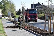 Výsadba stromů na Frýdecké ulici.