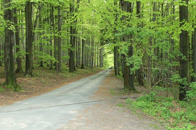 Cesta na Prašivou.