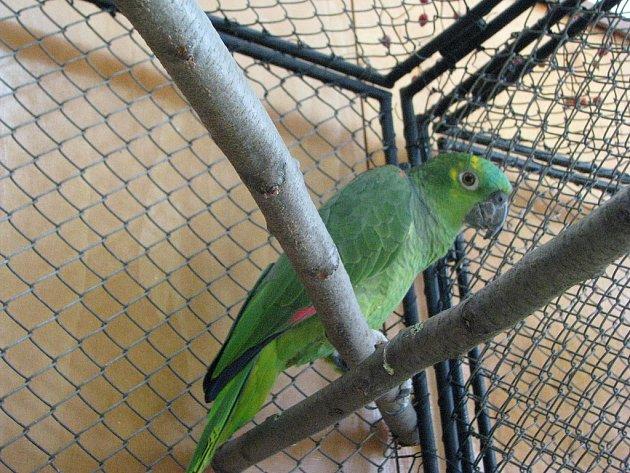 V Domě chovatelů bylo o víkendu k vidění skoro dvě stě papoušků.