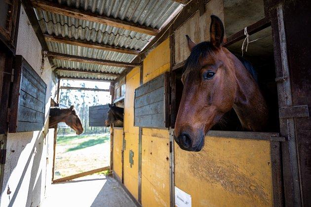 Stáj Newport se specializuje na chov a výcvik koní, nachází vDolních Domaslavicích nedaleko Žermanické přehrady. Část  jezdeckého areálu je zasazena do příjemného údolí. Snímek zkonce dubna 2021.