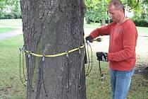 Jeden ze zaměstnanců právě kontroluje, jak na tom strom ve Frýdku-Místku vlastně je.