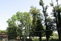 Povodí Odry vykácí poškozené stromy kolem řeky Ostravice v sadech Bedřicha Smetany ve Frýdku-Místku.