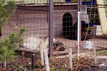 Na snímku jsou psi, které zloději omámili v třineckém autobazaru.