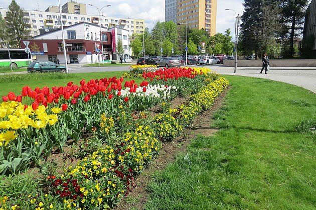 Záhon na pomezí ulic Ostravská a 8. pěšího pluku v centru Místku září v květnu v nádherných barvách.