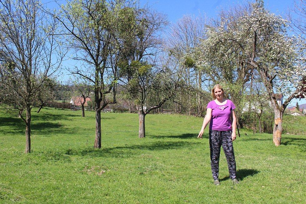 Téměř v centru obce Bystřice usmrtil v květnu v noci vlk jednu ovci. Další přežila. Majitelka Renata Miltová ukazuje, místo, kde mrtvé zvíře našla.