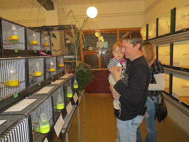 Dům chovatelů ve Frýdku-Místku hostil do neděle tradiční výstavu exotického ptactva.