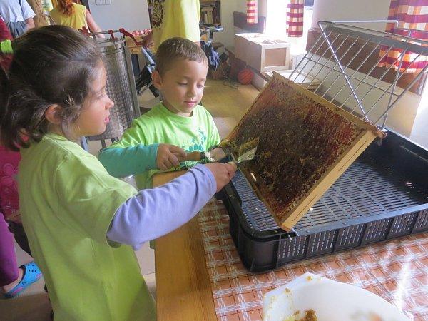 Děti se seznámily se včelařstvím.