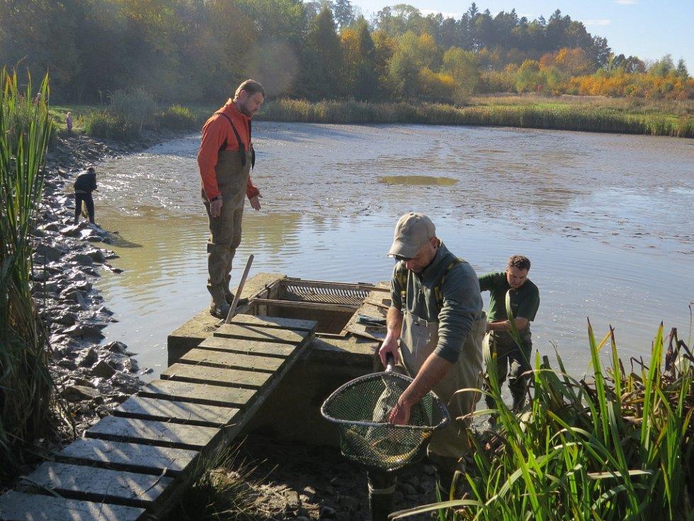 Rybáři ve Fryčovicích uspořádali ve státní svátek tradiční výlov rybníka.