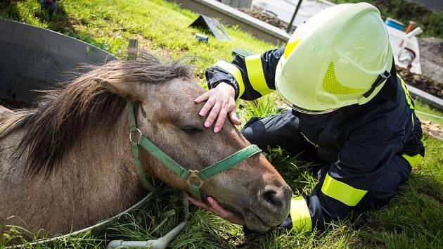 Záchrana koně z jímky v Bruzovicích na Frýdecko-Místecku.