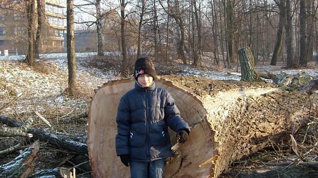 I tento statný strom u řeky Ostravice ve Frýdku-Místku nechalo Povodí Odry setnout, což vzedmulo u občanů vlnu pobouření.