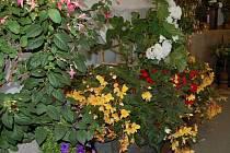 Zahrádkáři z třinecké části Nebory připravili na poslední prázdninový víkend výstavu květin.