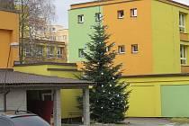 Nejkrásnější vánoční strom v soutěži, kterou vyhlásila společnost TS, je u ZŠ a MŠ v ulici Jana Čapka.