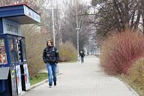Snímek je pořízen z Ostravské ulice ve Frýdku-Místku. Je na něm vidět, že keře opravdu zasahují až na chodník.