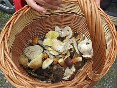 Hřibovité houby nyní lákají ke sběru.