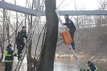 Budky pro ohroženého morčáka jsou zavěšeny na stromech v areálu Třineckých železáren.