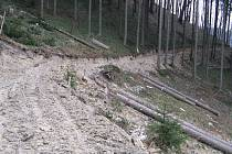 Takto vypadá lesní stezka v Palkovicích dnes.