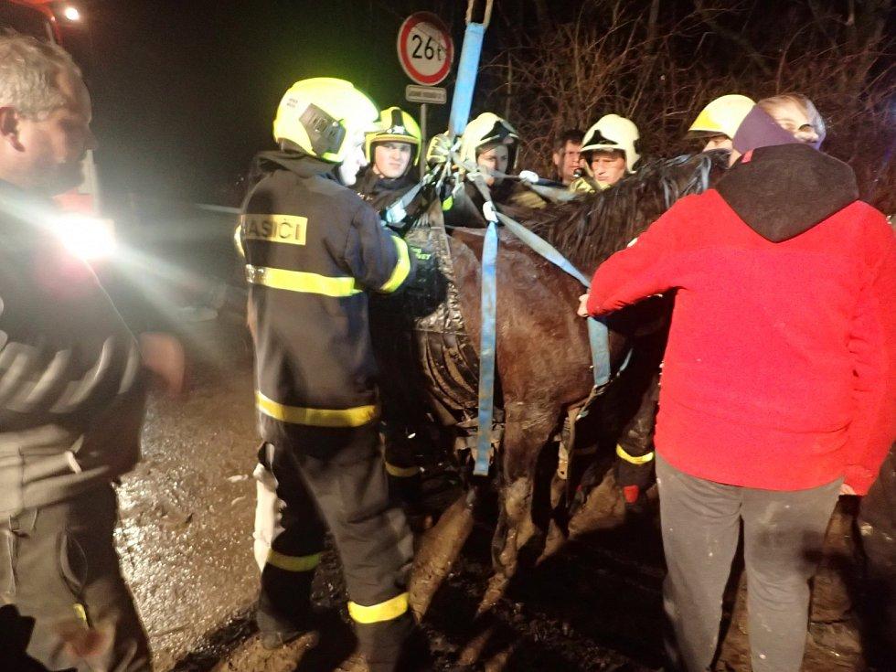 Zraněnou Fidorku museli její zachránci nejprve uspat.