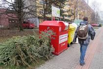 Živé vánoční stromky ve městech končí obvykle u popelnic. Ilustrační snímek.