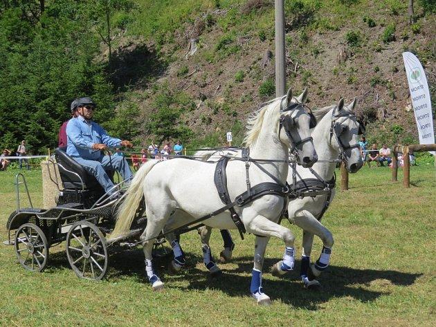 Pátý ročník Vozatajských závodů v Dolní Lomné v sobotu nabídl soutěže jednospřeží, dvouspřeží a čtyřspřeží.
