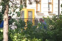 Muži uklízejí větve z pokácených javorů na Komenského ulici v Místku. Ze vzrostlých stromů už zbyly jen pařezy vyčnívající z ostrůvků v chodníkové dlažbě.