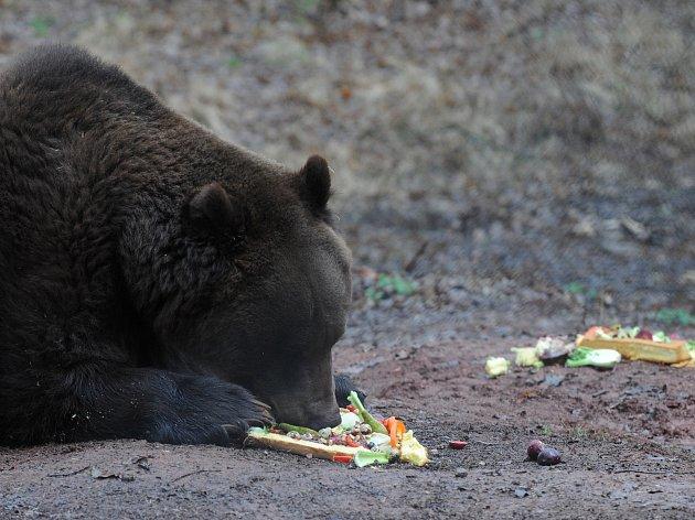 Medvědi v Beskydech