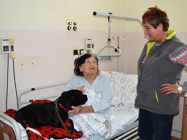 Psí návštěva v nemocnici.