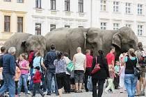 Sloni lákali lidi do cirkusu i na místeckém náměstí Svobody.