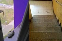 Obyvatele panelového domu v Pekařské ulici ve Frýdku-Místku obtěžují krysy a všudypřítomný zápach. Jejich mrtvá těla se objevují i na chodbách.