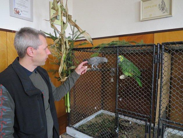Dům chovatelů na Zámeckém náměstí ve Frýdku-Místku hostil do neděle čtyřdenní podzimní výstavu exotického ptactva.