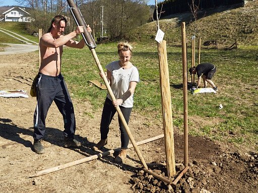 Výsadba stromů v Hrádku.